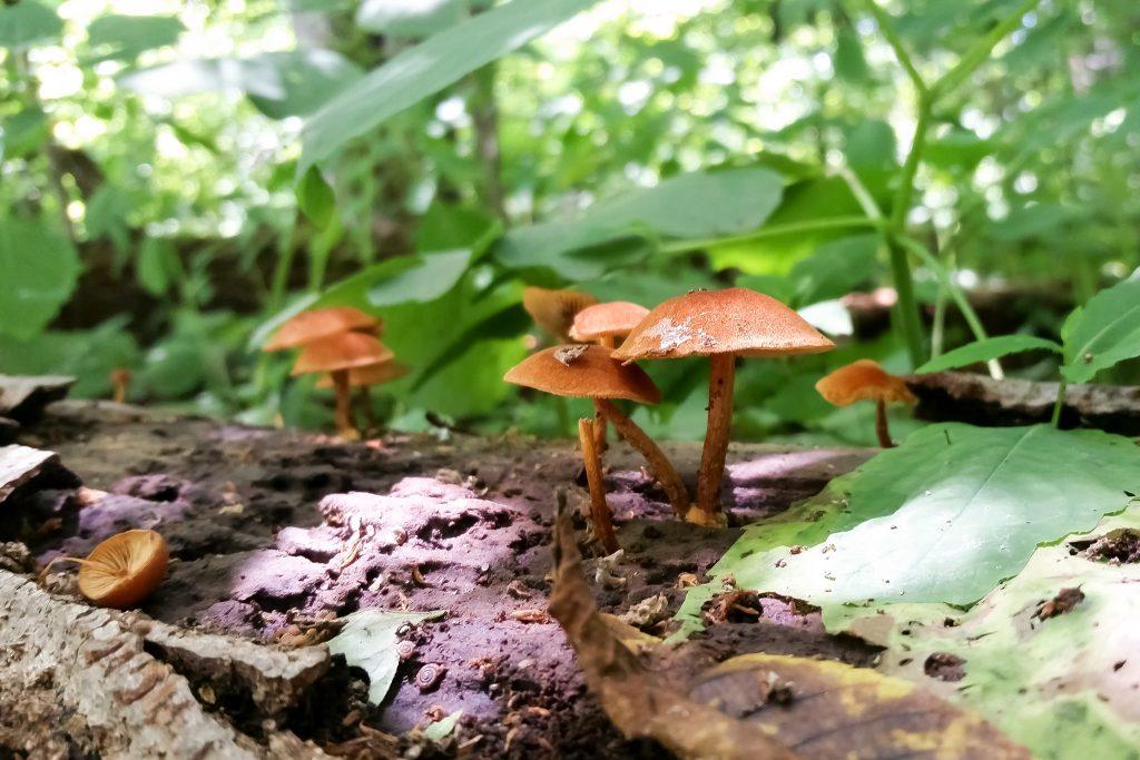 cosm_workshop_intensive_mushrooms