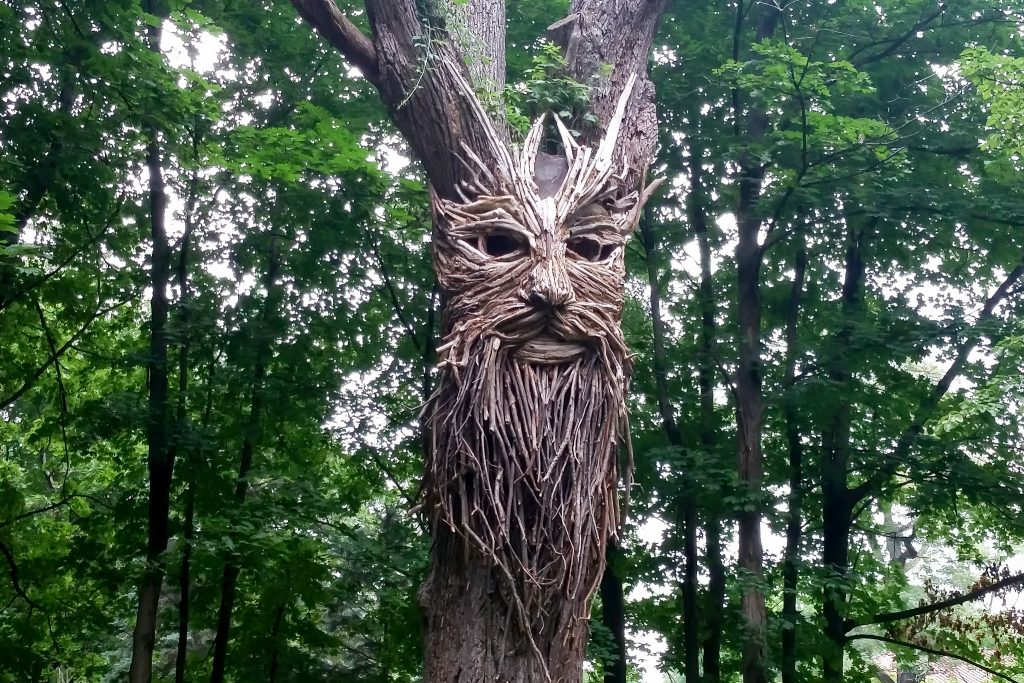 cosm_workshop_intensive_widsom-trail-tree